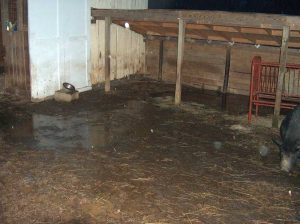 Isn't this depressing?  Even the run-in shed for the sheep is flooded.  Everything is wrong about this setup.  The ground tilts towards the barn, sending ALL the rainwater towards the barn and shed.