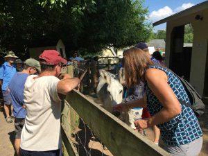 Visitors at a farm tour